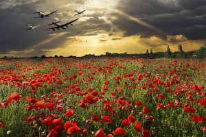 Symbolic aircraft from World War One and World War Two - SE5a, a Hurricane, a Lancaste, a Spitfire and a Dakota, heading into the sunset at low level over a field of red poppies.